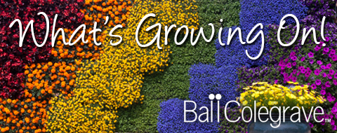 Ball Colegrave - What's Growing On